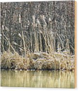 Cattail Reflections Wood Print