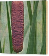 Cattail With Texture Wood Print