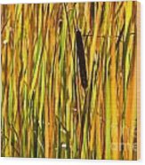 Cattails Aflame Wood Print