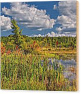 Cattails And Clouds Wood Print