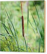 Cattails And Reeds Wood Print
