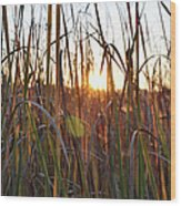 Cattails And Reeds - West Virginia Wood Print