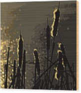 Cattails At Sunset Wood Print