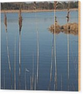 Cattails Cape May Point Nj Wood Print