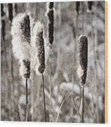 Cattails In Winter Wood Print