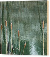 Cattails On Green Wood Print