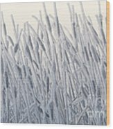 Cattails Typha Latifolia Covered In Snow Wood Print