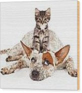 Catte Dog With Kitten On His Head Wood Print