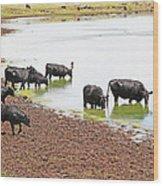Cattle At Big Lake Arizona Wood Print
