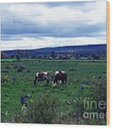 Cattle At Pasture Wood Print