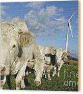 Cattle Wood Print by Bernard Jaubert