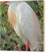 Cattle Egret Adult In Breeding Plumage Wood Print