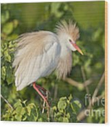 Cattle Egret Wood Print