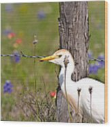 Cattle Egret At Fenceline Wood Print