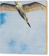 Cattle Egret In Breeding Plumage Wood Print by Shawn Lyte