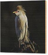 Cattle Egret On Limb Wood Print