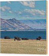 Cattle Grazing At Hawea Lake In Southern Alps In New Zealand Wood Print