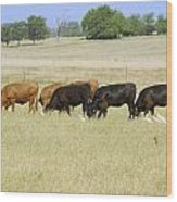 Cattle Grazing Wood Print