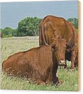 Cattle Grazing In Field Wood Print