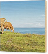 Cattle Grazing In Picturesque Meadow Wood Print