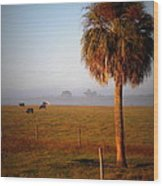 Cattle Grazing On Foggy Morning 1 Wood Print