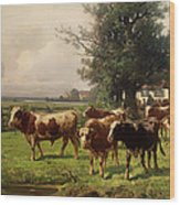 Cattle Heading To Pasture Wood Print