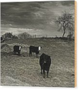 Cattle In The Winter Pasture Series Image 2 Wood Print