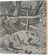 Cattle Resting Wood Print