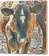 Cattle Round Up Wood Print