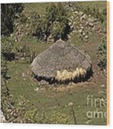 Cattle Shelter, Ethiopia Wood Print
