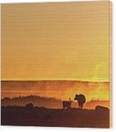 Cattle Silhouette Panorama Wood Print