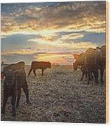 Cattle Sunset 2 Wood Print