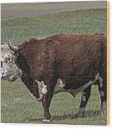 Cattle With Horns Full Body Portrait Wood Print
