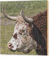 Cattle With Horns Side Portrait Wood Print