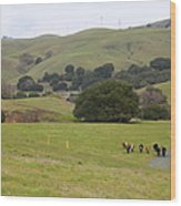 Cattles At Fernandez Ranch California - 5d21061 Wood Print