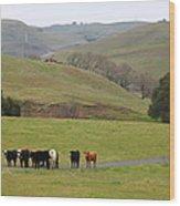 Cattles At Fernandez Ranch California - 5d21062 Wood Print