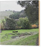 Cattles At Fernandez Ranch California - 5d21066 Wood Print by Wingsdomain Art and Photography