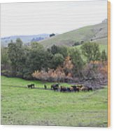 Cattles At Fernandez Ranch California - 5d21070 Wood Print by Wingsdomain Art and Photography