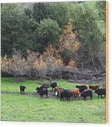 Cattles At Fernandez Ranch California - 5d21071 Wood Print by Wingsdomain Art and Photography