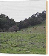 Cattles At Fernandez Ranch California - 5d21104 Wood Print