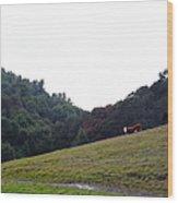 Cattles At Fernandez Ranch California - 5d21106 Wood Print