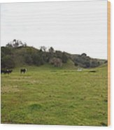 Cattles At Fernandez Ranch California - 5d21124 Wood Print by Wingsdomain Art and Photography