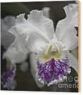 Cattleya Catherine Patterson Full Bloom Wood Print