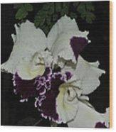 Cattleya Moscombe 'the King'  3 Of 3 Wood Print