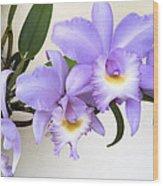 Cattleya Orchid Wood Print
