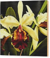 Cattleya Too Wood Print