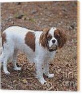 Cavalier Dog Wood Print