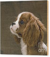 Cavalier King Charles Spaniel Dog Wood Print