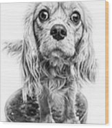 Cavalier King Charles Spaniel Puppy Dog Portrait Wood Print