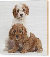 Cavapoo Puppies Wood Print